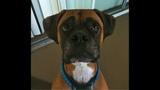 Photos: Family wants pet dog Edgar returned - (7/25)