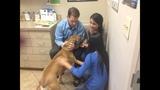 Photos: Family wants pet dog Edgar returned - (5/25)