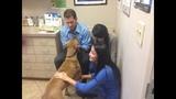 Photos: Family wants pet dog Edgar returned - (9/25)