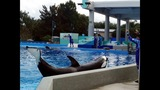 Wild Days at SeaWorld Orlando - (13/13)