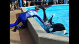 Wild Days at SeaWorld Orlando - (2/13)