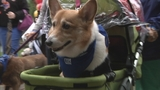 Photos: Paws in the Park - (9/10)