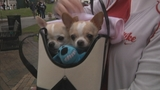 Photos: Paws in the Park - (1/10)