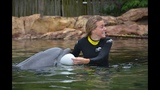 Tampa Bay Rays pitcher proposes at Discovery Cove - (2/4)