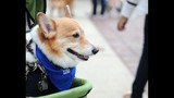 20th Annual Paws in the Park - (5/25)