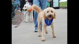 20th Annual Paws in the Park - (1/25)