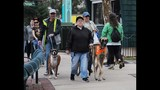 20th Annual Paws in the Park - (4/25)
