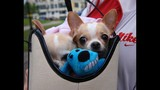20th Annual Paws in the Park - (3/25)