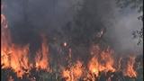 Photos: Avalon Park brush fire - (5/9)
