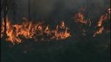Photos: Avalon Park brush fire - (9/9)