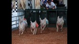 70th Annual Osceola County Fair - (16/25)