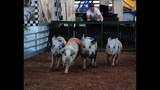 70th Annual Osceola County Fair - (14/25)