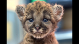 Photos: Zoo babies - (10/25)