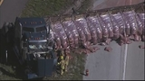 Photos: Truck with mulch overturns, blocking I-4 - (9/11)