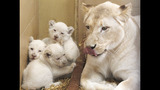 Photos: Zoo babies - (4/25)