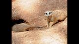 Experience Brevard Zoo - (24/25)