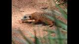 Experience Brevard Zoo - (10/25)