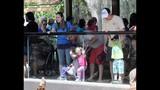 Experience Brevard Zoo - (16/25)