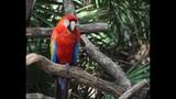 Experience Brevard Zoo - (6/25)
