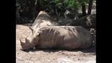 Experience Brevard Zoo - (14/25)