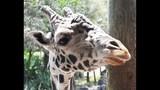 Experience Brevard Zoo - (17/25)