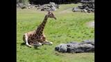 Experience Brevard Zoo - (25/25)