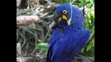 Experience Brevard Zoo - (4/25)