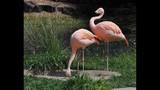 Experience Brevard Zoo - (15/25)