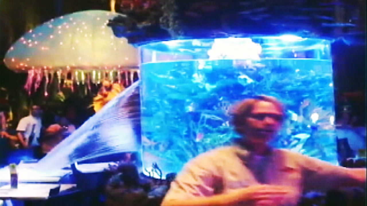 Fish aquarium jobs - Guest Captures Video Of Large Fish Tank Breaking Inside Downtown Disney Restaurant Wftv