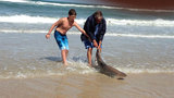 Photos: Angler reels in large shark off New… - (3/7)
