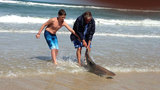 Photos: Angler reels in large shark off New… - (5/7)