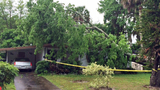 Photos: Volusia County storm damage - (3/3)