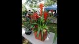 2014 Apopka Art & Foliage Festival - (25/25)