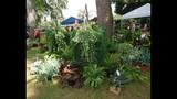 2014 Apopka Art & Foliage Festival - (14/25)