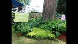 2014 Apopka Art & Foliage Festival - (21/25)