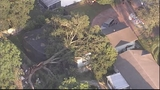 Photos: Tree crashed through Pine Hills home - (13/14)