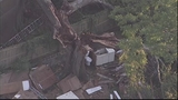 Photos: Tree crashed through Pine Hills home - (12/14)