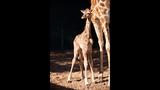 Busch Gardens' Spring 2014 Babies - (3/7)