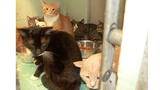 Photos: More than 60 cats found in deplorable… - (2/3)