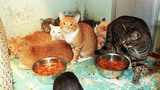 Photos: More than 60 cats found in deplorable… - (3/3)