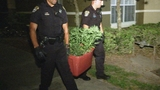 Photos: Police find marijuana growing in apartment - (9/9)