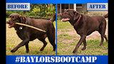 Photos: Baylor's Boot Camp Progress - (11/25)