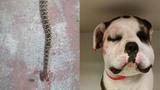 Photos: Rattlesnake bites mother dog, puppies - (3/5)
