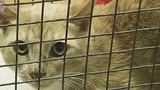 Photos: Cat rescued from soon-to-be… - (7/7)