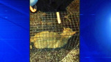 Photos: Cat rescued from soon-to-be… - (2/7)