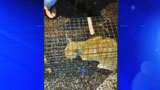 Photos: Cat rescued from soon-to-be… - (4/7)