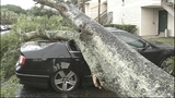 Photos: Severe weather knocks down trees in… - (10/11)