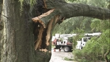 Photos: Severe weather knocks down trees in… - (6/11)