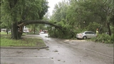 Photos: Severe weather knocks down trees in… - (2/11)