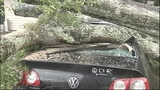 Photos: Severe weather knocks down trees in… - (11/11)
